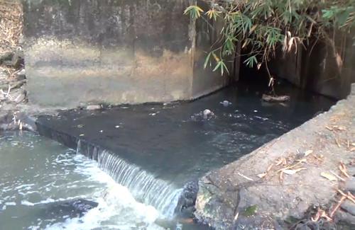 nước thải từ những trang trại
